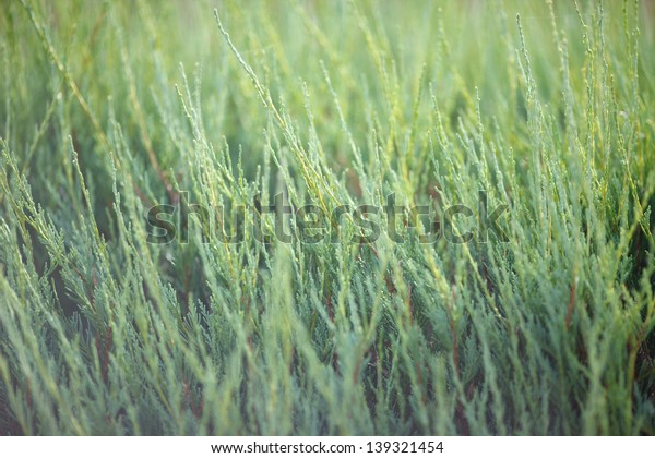 horsetail as a texture