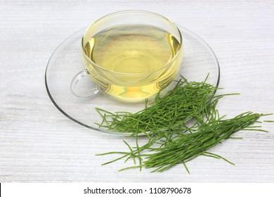 Horsetailtea, Tea, Medicinal tea, herbtea, Medicinal plant, Equisetum arvense, the field or common horsetail