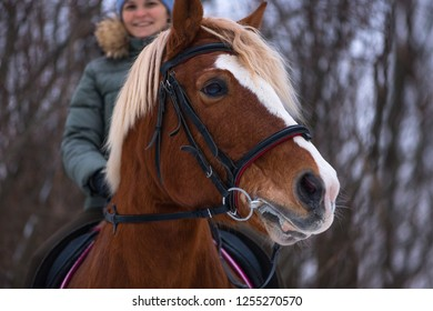 The horsewoman and her red horse with white stripe on a blurred background in rural. The happy caucasian woman is having a horseback riding in a winter forest.