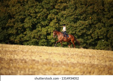 Horsewoman with horse galloping on a stubble field in summer photographed from the front from some distance.