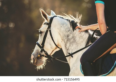 Horsewoman rider stroking horse mane during sunset