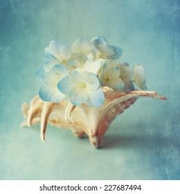 Hortensia flower in the sea shell