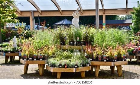 Horticulture display at Dobbies Garden Centre in Lasswade, Midlothian Edinburgh. scotland uk September 2017