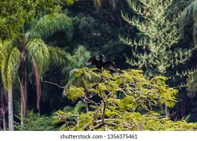 Horto Florestal in Sao Paulo, Brazil