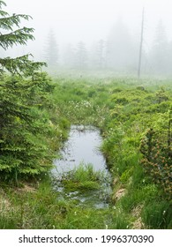 czechKrušné hory mountain landscape in foggy weather - Shutterstock ID 1996370390