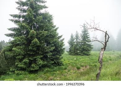 czechKrušné hory mountain landscape in foggy weather - Shutterstock ID 1996370396