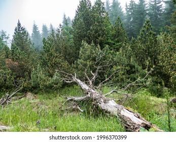 czechKrušné hory mountain landscape in foggy weather - Shutterstock ID 1996370399