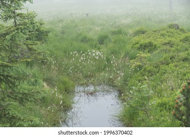 czechKrušné hory mountain landscape in foggy weather - Shutterstock ID 1996370402