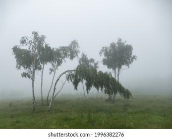 czechKrušné hory mountain landscape in foggy weather - Shutterstock ID 1996382276