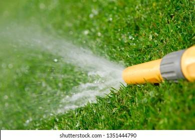 Hosepipe watering garden.