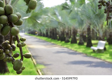 Hospita Palm