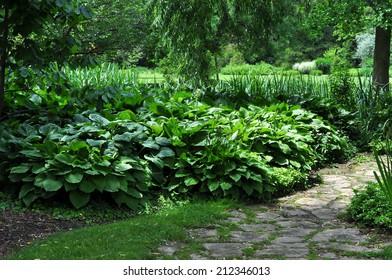 Hostas in a Botanical Garden