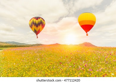 Hot air balloon over cosmos flowers with blue sky at sunset time