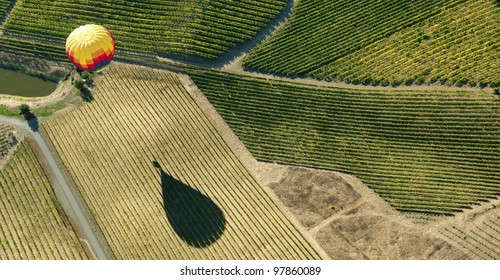 Hot Air Balloon over Vineyards