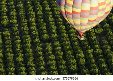 Hot Air Balloon Ride over the Vineyards of Temecula, California