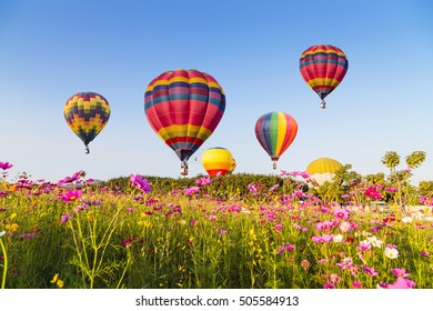 Hot air color balloon over cosmos flowers with blue sky