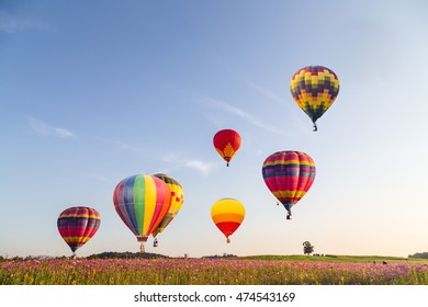 Hot air colorful balloon over cosmos flowers with blue sky