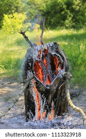 hot burning wood in forest