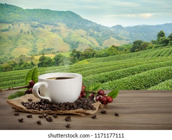 Hot coffee cup with fresh organic red coffee beans and coffee roasts on the wooden table and the plantation background with copy space for your text.