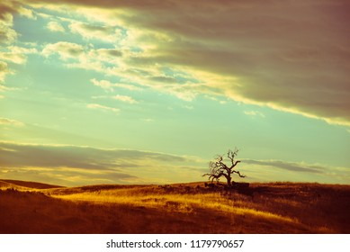 Hot dry Californian savanna landscape and beautiful sunset cloudscape on the way from Yosemite National Park to San Francisco, California. Rustic yellow color design.