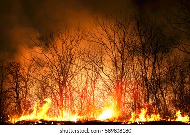 Hot fire burning the forest at night time in dark low key tone, environment concept