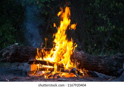 hot flame of camp fire in dark forest