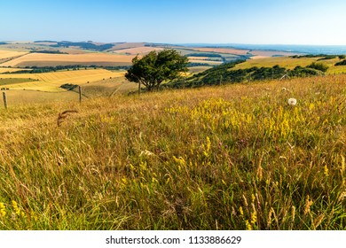 A hot morning walk in July along the South Downs Kingston near Lewes east Sussex south east England