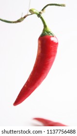hot red pepper. chile on white background