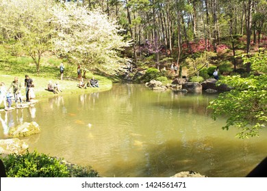 Hot Springs, AR/USA: March 31, 2018 – Visitors relax at Koi pond at Garvan Woodland Gardens, named after its benefactor Verna Cook Garvan. Spring foliage visible.