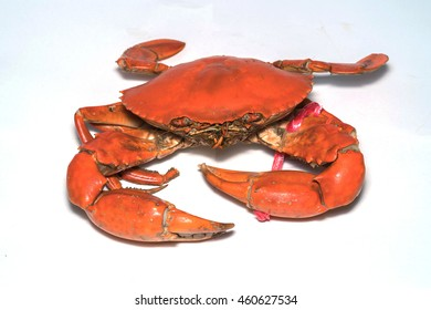Hot Steamed black Crabs