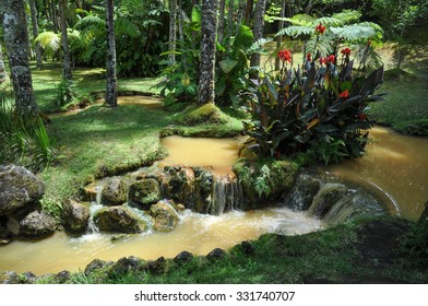 Hot stream in the Terra Nostra Parque, Azores islands. Portugal.