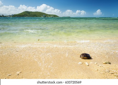 Hot summer beach scene in tropical Noumea, New Caledonia with coconut shell on sand