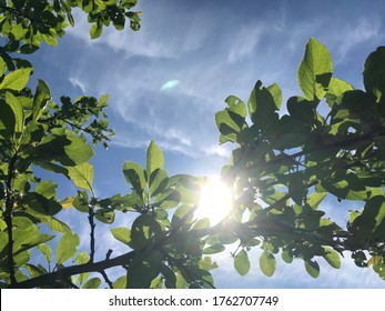 Hot summer in nature, among flowers and herbs. Fresh air. Bumblebees and bees. The sun and blue cloudless sky. What could be better?