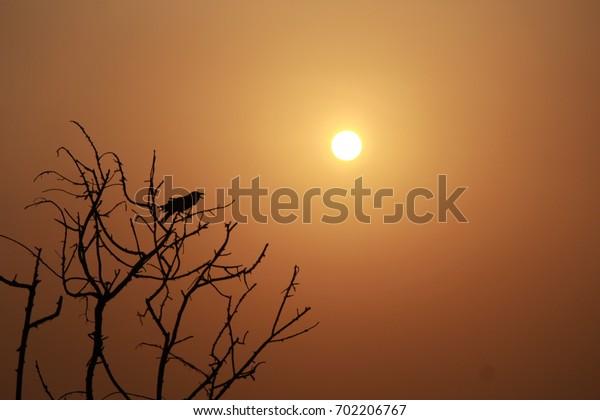 Hot Summer Sunset.