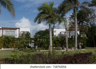 The hotel territory with palm trees Punta Cana, Dominican Republic