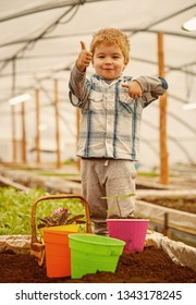 hothouse industry. hothouse industry pdoruction. small child farmer work in hothouse industry. hothouse industry concept. fun