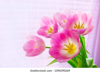 hoto of a beautiful pink tulips, brightly lit by sunlight on a light background. Copy space on the left.