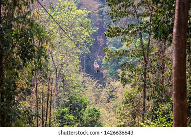 Houayxay, Laos - March 2019: Zip lining in the jungle of Laos, Gibbon Experience, Laos