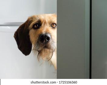 犬がドアの周りを覗き込む