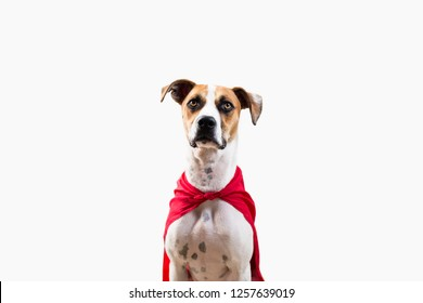 Hound Puppy in Super Hero Cape