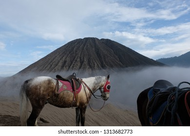 Hourse at bromo volcano