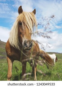 A hourse in a Icelandic field