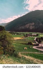 hourses in austria
