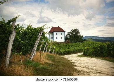 House among the vineyards in summer.Slovenske Konjice, Slovenia