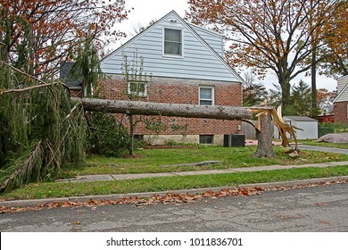 A House Behind A Large Tree Which Fell During Hurricane Sandy, Which is Unofficially Referred to as Superstorm Sandy