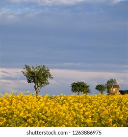 House in blooming colza field at sunset Langres in France