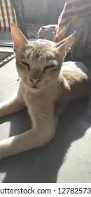 house cat sitting under sunshine