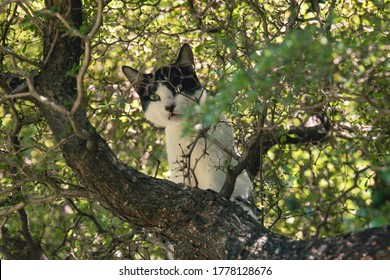 A house cat stuck in a tree safe from dogs.