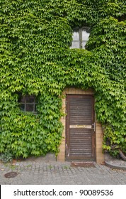 House covered in green leaves. Symbolizing green living.