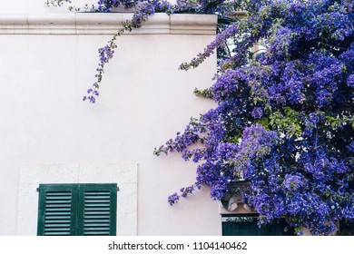 House facade with purple flowers